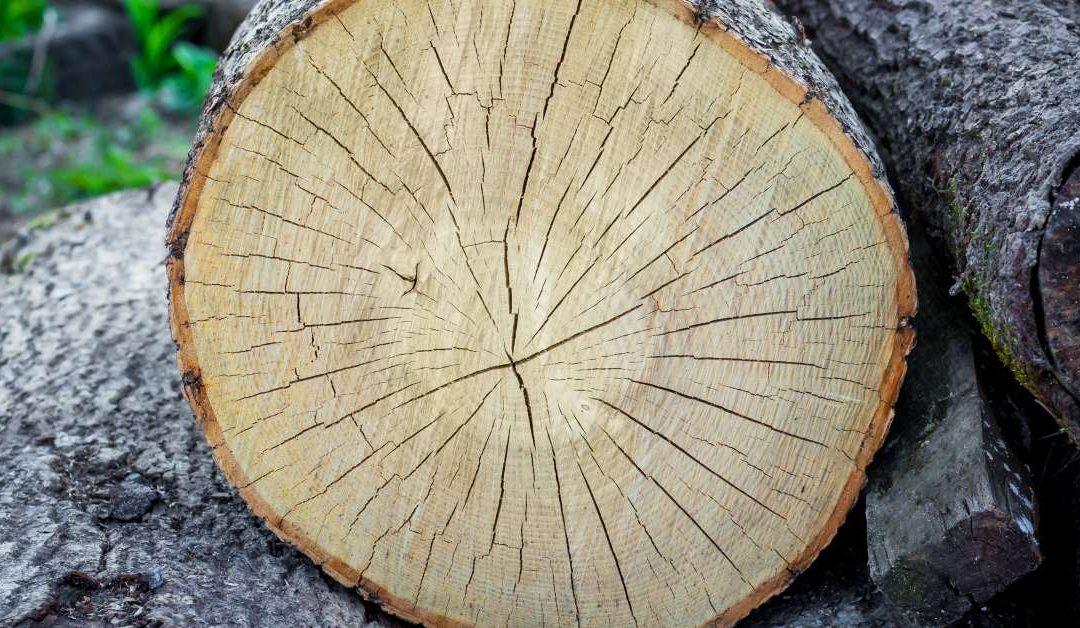 5 razones que convierten a la madera en un material único